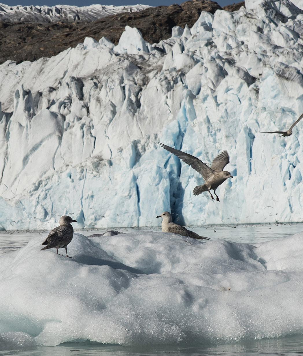 Greenland_paesaggi